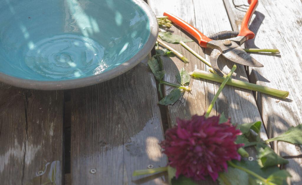 Min lilla sommarträdgård